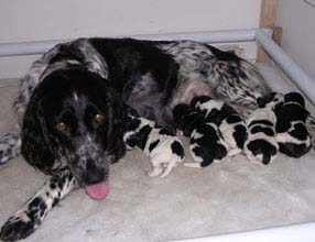 Willow and puppies 2 days