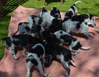 puppies2013-30